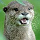 Feeshy Otter
